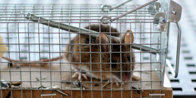 Mausfalle 660x330 - Kammerjäger – professionelle Hilfe bei Plagegeistern